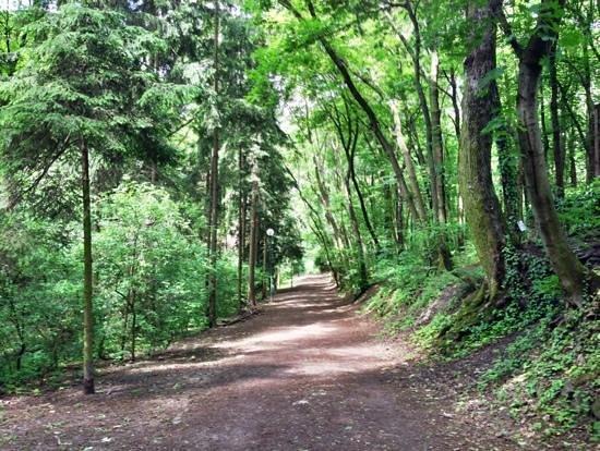 Running in Bratislava, horsky park