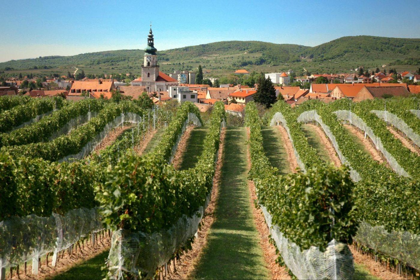 Small Carpathian Wine Roa